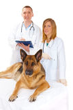 Two vets examining dog Stock Image