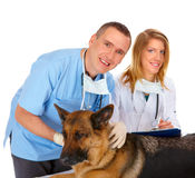 Two vets examining dog Stock Images