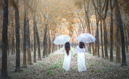 Two Vietnamese girl in traditional long dress or Ao Dai go to the end of the road in rubber forest Royalty Free Stock Images