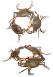 Two views of crabs Royalty Free Stock Photos