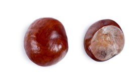 Two views of a fresh chestnut Royalty Free Stock Image