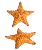 Two views of star fish Stock Photos