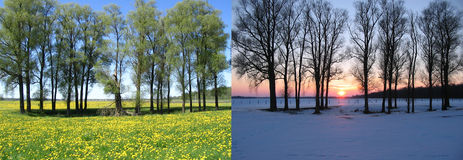 Two views: trees in field. Trees in field. Two sides of year Royalty Free Stock Photography