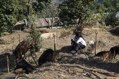 Two village student reading books in Solukhumbu. stock image