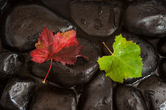 Two Vine Leaves on Dark Stones Stock Photography