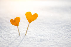 Two vintage orange tangerine hearts on white snow Stock Images