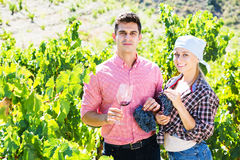 Two vintners outdoors stock photos