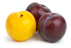 Two violet plums and one yellow Stock Photos