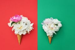Two waffle ice cream cones with white peony flowers on red green background. Summer concept. Copy space, top view. Minimalism stock image