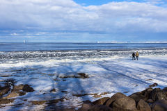 Two are walking on the coastline of the Baltic sea. Two  are walking on the coastline of the Baltic sea on the winter day Stock Image