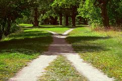 Two walking paths among the grass intersect in the park on a bright sunny summer day. Two footpaths in the grass intersect in the park on a bright sunny summer stock photography