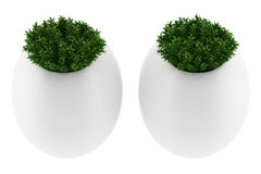 Two wall plants in pots isolated on white Royalty Free Stock Image