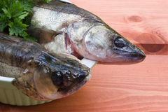 Two walleye on the table Royalty Free Stock Images