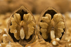 Two walnut shells Stock Image