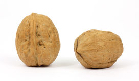 Two walnuts on a white background Royalty Free Stock Photo