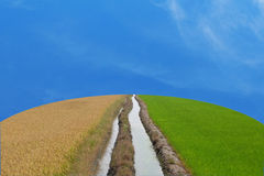 Two Water flows through the middle between a dry and arid rice f. Ield and a green rice field on the earth shape with blue sky and lightly cloud Stock Photo