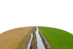 Two Water flows through the middle between a dry and arid rice f. Ield and a green rice field on the earth shape (Isolated Stock Photos
