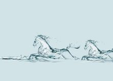 Two Water Horses Running Royalty Free Stock Photos