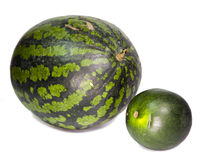 Two water-melons of various grades - big and dwarfish Stock Image