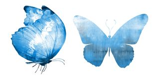 Free Two Watercolor Butterflies , Isolated On White Stock Photos - 167490363