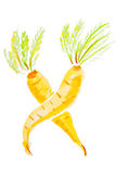 Two watercolor carrots Stock Photography