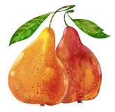 Two watercolor pears Stock Photography