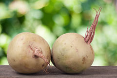 Two watermelon radish on a wooden table with blurred garden background.  Stock Image