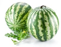 Two watermelons with a leaves Royalty Free Stock Photos