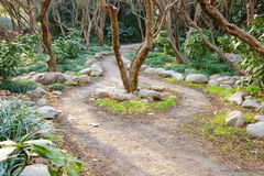 Two way path around the tree. This path in a park.It's a very beautiful view Royalty Free Stock Photo