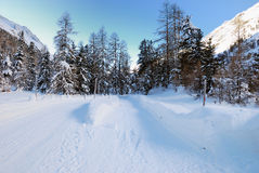 Two way road. Snow path across the pine wood for horse sleighs only Royalty Free Stock Photography