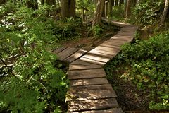Two Ways Cross Trail. Wooden Pathway Trail in Olympic National Park. Cape Flattery Trail. Washington State, USA. Recreation Photo Collection Royalty Free Stock Photography