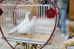Two wedding doves as love symbol. Two doves as love symbol at wedding royalty free stock image