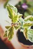 Two wedding gold rings on the flowerpot. Wedding rings on a leafs. Wedding jewelry stock image