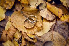 Two wedding Golden rings Stock Photo