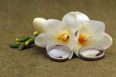 Two wedding  rings. Of platinum and tender flowers  on a green textile background Stock Photography