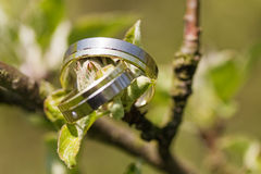 Two wedding rings. Placed on a wooden branch stock images