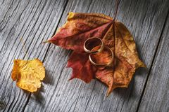 Two wedding rings on autumn leaves on a wooden board. Concept on the subject of seasonal jewelry discounts.  stock photography