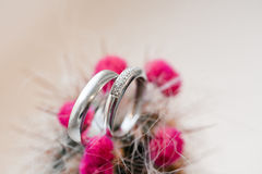 Two wedding rings in cactus. Two wedding rings of white gold with diamonds in cactus with pink flowers Stock Images