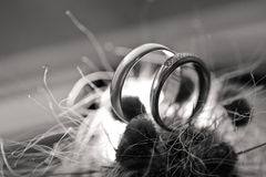 Two wedding rings in cactus Royalty Free Stock Photo