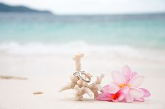 Two wedding rings on coral in front of the seaside. With flowers Stock Photos