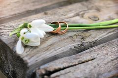 Two wedding rings and flowers of snowdrops on a wooden rustic ba. Ckground. Spring Royalty Free Stock Photos