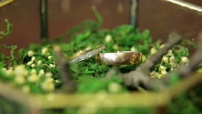 Two wedding rings in glass box with moss, close-up stock footage