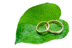 Two wedding rings on a green leaf. Two wedding rings on a fresh, green leaf with droplets Stock Photography