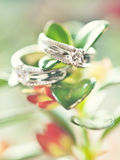 Two wedding rings on green  plant with flowers Stock Photo
