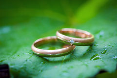 Two wedding rings on a leaf Stock Photography