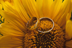 Two wedding rings lie on a large sunflower. Stock Photography