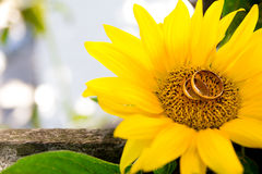 Two wedding rings lie on a large sunflower. Stock Photos