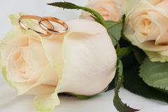 Two wedding rings lie on a rose Stock Image