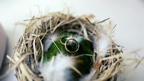 Two wedding rings in the nest. Two wedding rings in a nest handmade stock video footage