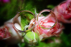 Two wedding rings on pink rose  flower. Close up photo of two wedding rings on pink rose flower Stock Image
